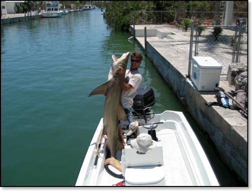 Shark fishing for Shark fishing charters